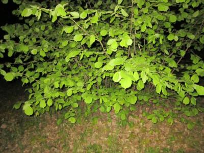 Полицейские выявили факт незаконного хранения наркотического средства растительного происхождения